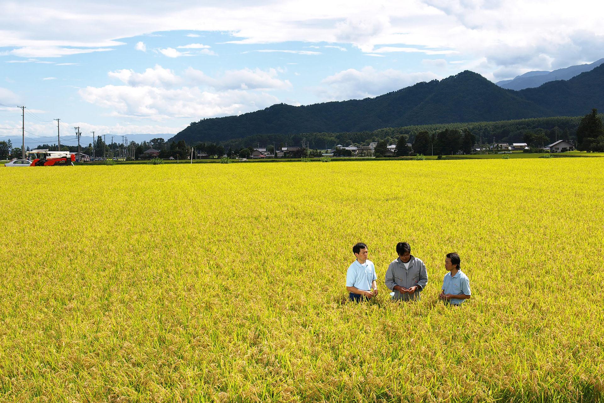 Miyasaka Brewing Company